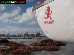 kayakfari.com miami kayak paddle surf ski kayakfari flex maslan photography photo florida fitness
