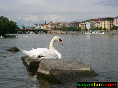 kayak Prague vltava swan fitness paddling kayakfari river old town