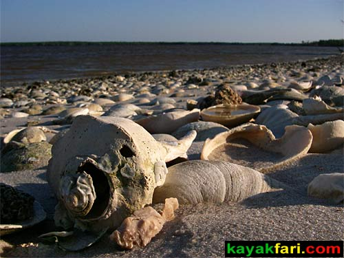 Sea Grape Liquor Still Bay kayakfari everglades moonshine totch brown islands 10000 ten thousand flex maslan