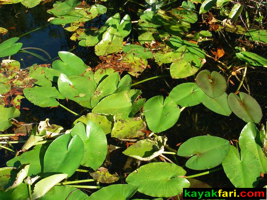 Taylor Slough Everglades kayakfari