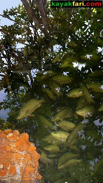 kayakfari.com Little Rabbit Key Fishes fish flex maslan digital029art kayakfari