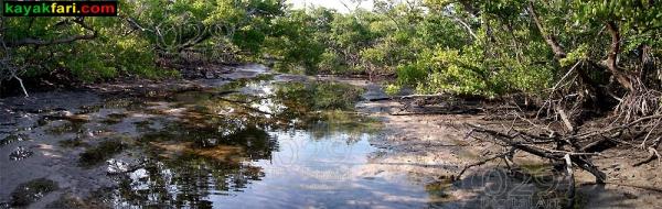 Whiskey Creek kayak Mizell-Johnson park John U Lloyd kayakfari flex maslan florida paddle beach ft lauderdale dania snorkel dive