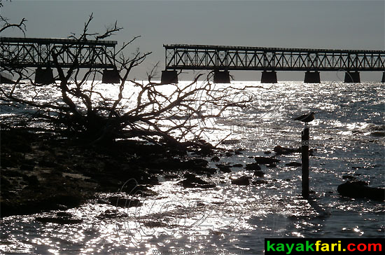 Bahia Honda Keys kayakfari kayak camp 7 mile bridge beach coral reef