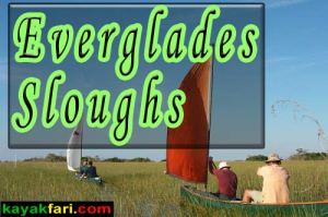 Paddling the Everglades Sloughs national park shark river taylor kayakfari swamp Florida kayak everglades flex maslan canoe florida bay destinations