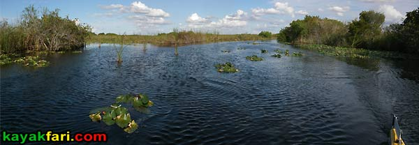 Shark River Slough Everglades expedition camping River of Grass kayakfari Flex Maslan marshall foundation kayak canoe sawgrass bottle creek
