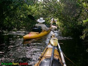 Shark River Slough Everglades expedition camping River of Grass kayakfari Flex Maslan marshall foundation kayak canoe sawgrass rookery branch