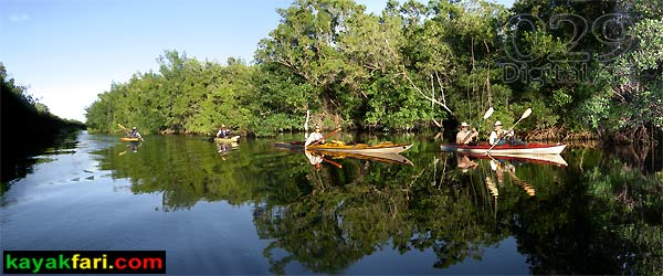 Shark River Slough Everglades expedition camping River of Grass kayakfari Flex Maslan marshall foundation kayak canoe sawgrass buttonwood canal flamingo