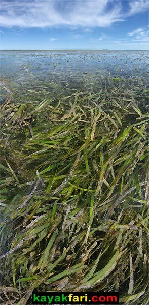 First National Bank kayakfari Florida Bay kayak Everglades Flex Maslan mud flats low tide
