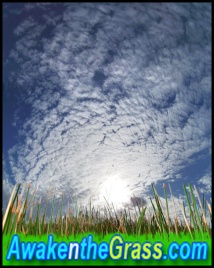 awakenthegrass Flex Maslan awakenthegrass.com awakeinthegrass digital029art kayakfari everglades photography florida hiking