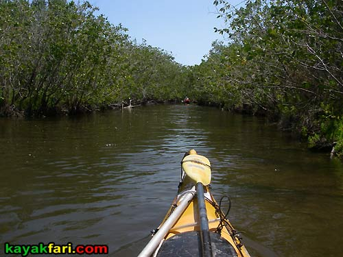 Charley Creek kayakfari everglades rookery bay mud flex maslan mangrove birds