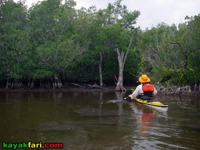 Gopher Key kayakfari everglades calusa shell mound indian conch clam flex maslan