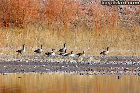 2014 c. Flex Maslan Winter Cochiti Lake kayakfari paddling kayak photography New Mexico snow ice breaker Santa Fe high altitude desert art Rio Grande geese