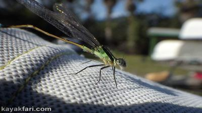 Miami River kayakfari Okeechobee Everglades Flex Maslan canoe expedition paddle River of Grass 2014 kayak dragonfly