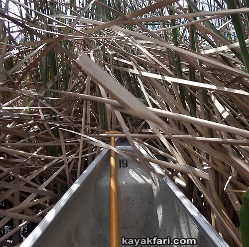 Miami River kayakfari Okeechobee Everglades Flex Maslan canoe expedition paddle River of Grass 2014 kayak sawgrass