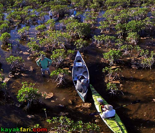 Flex Maslan kayakfari.com Bill Ashley Jungle Herman Lucerne backcountry Paurotis Pond kayakfari aerial Hells Bay canoe kayak trail everglades photography mangroves