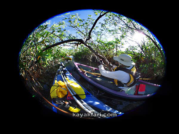 Flex Maslan kayakfari.com Bill Ashley Jungle Herman Lucerne backcountry Paurotis Pond kayakfari aerial Hells Bay canoe kayak trail everglades mangroves fisheye