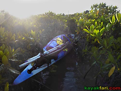 Flex Maslan kayakfari.com Bill Ashley Jungle Herman Lucerne backcountry Paurotis Pond kayakfari aerial Hells Bay canoe kayak trail everglades mangroves invitational widowmaker