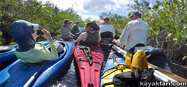 Flex Maslan kayakfari.com Bill Ashley Jungle Herman Lucerne backcountry Paurotis Pond kayakfari aerial Hells Bay canoe kayak trail everglades mangroves