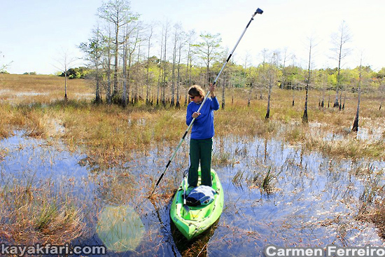 Flex Maslan Everglades aerial kayakfari grass Miccosukee paddle airboat 3A kayak sawgrass canoe dugout photo awakenthegrass