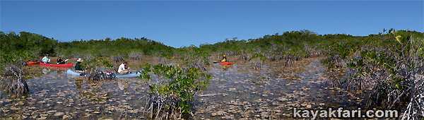 Flex Maslan kayakfari photographer kayak canoe everglades craighead pond panorama paddle mangrove taylor slough 9 nine mile pond