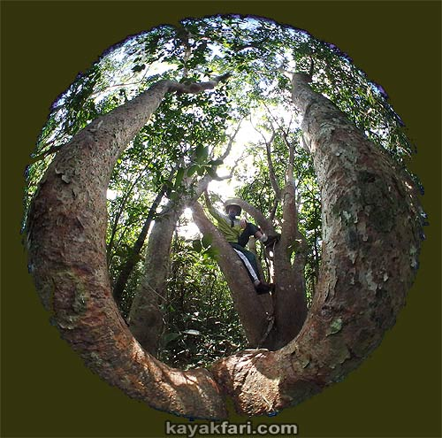 Flex Maslan kayakfari awakenthegrass kayak shark valley everglades paddling tree hammock seagrape sawgrass willoughby key 1898 circular fisheye