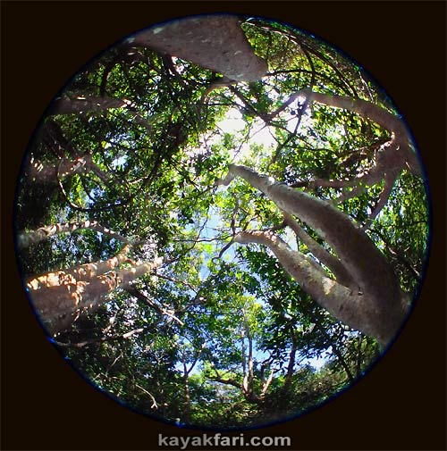 Flex Maslan kayakfari awakenthegrass kayak shark valley everglades paddling tree hammock seagrape sawgrass willoughby key 1898 circular fisheye gumbo limbo