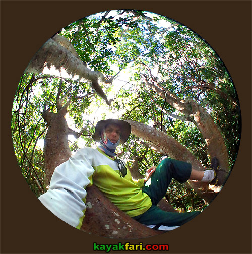 Flex Maslan kayakfari awakenthegrass kayak shark valley everglades paddling tree hammock seagrape sawgrass willoughby key 1898 circular fisheye gumbo