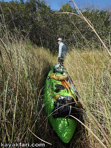Flex Maslan kayakfari awakenthegrass kayak shark valley everglades paddling tree hammock seagrape sawgrass willoughby key 1898