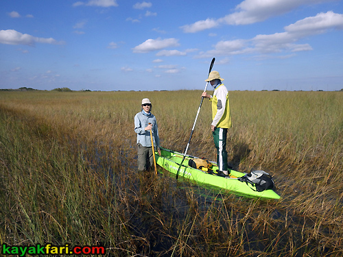 Flex Maslan kayakfari awakenthegrass kayak shark valley everglades paddling tree hammock seagrape sawgrass willoughby key 1898 trail