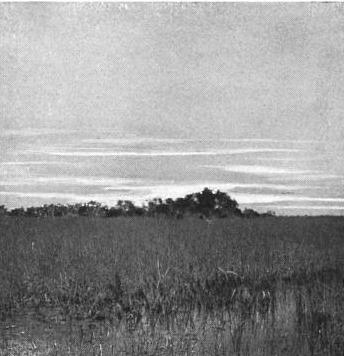 Hugh L Willoughby kayakfari awakenthegrass Flex Maslan kayak shark book across the everglades hammock seagrape sawgrass 1898