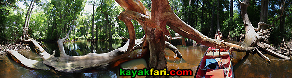 Flex Maslan canoe Loxahatchee River kayakfari panorama deadfall 360 photography wild Florida Jupiter Jonathan Dickinson park