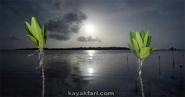 flex maslan kayakfari Barracuda Keys marvin shoal sandbar kayak paddle sugarloaf backcountry beach bay coral reef photography sunrise mangroves