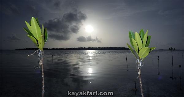 flex maslan kayakfari Barracuda Keys marvin shoal sandbar kayak paddle sugarloaf backcountry beach bay coral reef photography sunrise mangroves