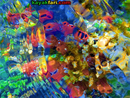flex maslan kayakfari Barracuda Keys marvin shoal sandbar kayak paddle sugarloaf backcountry beach bay coral reef photography psychedelic colors