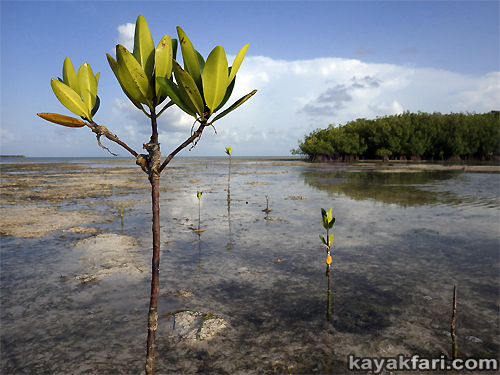 flex maslan kayakfari Barracuda Keys marvin shoal sandbar kayak paddle sugarloaf backcountry beach bay coral reef photography mangrove