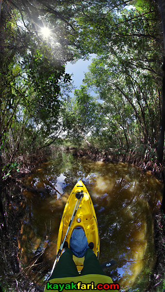 Flex Maslan kayakfari sup kayak miami everglades feet mangrove canopy florida paddle stand up