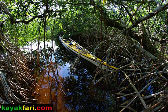 Flex Maslan kayakfari Everglades Art Roots paddling Photography mangroves florida keys bay estuary dreadlocks landscape kayak moonshine