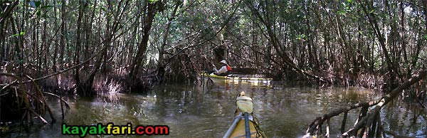 Flex Maslan kayakfari Everglades Art Roots paddling Photography mangroves florida keys bay estuary dreadlocks landscape kayak gopher