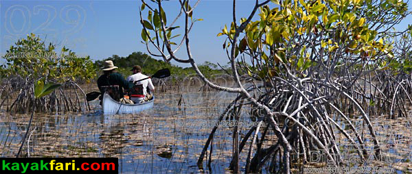 Flex Maslan kayakfari Everglades Art Roots paddling Photography mangroves florida keys bay estuary dreadlocks landscape kayak