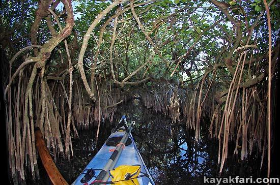 Flex Maslan kayakfari Everglades Art Roots paddling Photography mangroves florida keys bay estuary dreadlocks landscape kayak