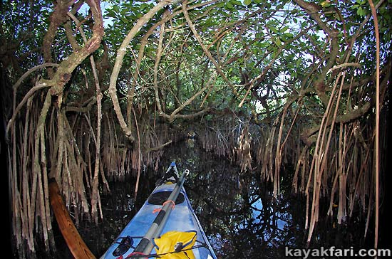 Flex Maslan kayakfari Everglades Art Roots paddling Photography mangroves florida keys bay estuary dreadlocks landscape kayak turner river
