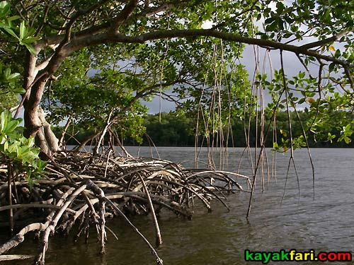 Flex Maslan kayakfari Everglades Art Roots paddling Photography mangroves florida keys bay estuary dreadlocks landscape kayak oyster