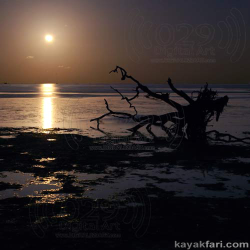 Flex Maslan kayakfari Everglades Art Roots paddling Photography mangroves florida keys bay estuary dreadlocks landscape kayak moon rise
