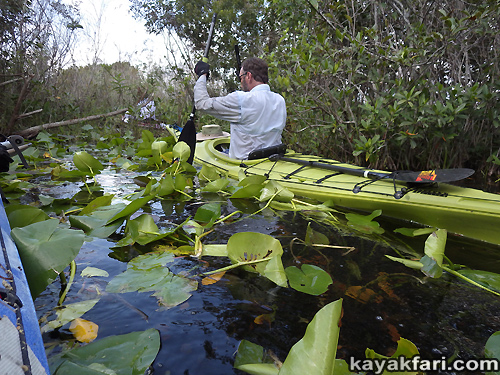 Flex Maslan Taylor Slough kayakfari everglades photography River of grass paddling kayak canoe craighead pond airboat trail florida