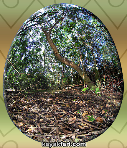 Flex Maslan easter egg decoration everglades kayakfari circular fisheye photography kayak camp panorama 360 art 180 florida awakenthegrass chekika island