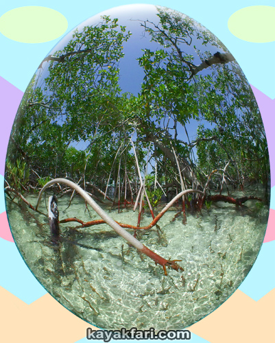Flex Maslan easter egg decoration everglades kayakfari circular fisheye photography kayak camp panorama 360 art 180 florida awakenthegrass marvin key