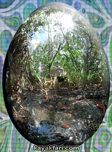Flex Maslan easter egg decoration everglades kayakfari circular fisheye photography kayak camp panorama 360 art 180 florida awakenthegrass liquor still totch