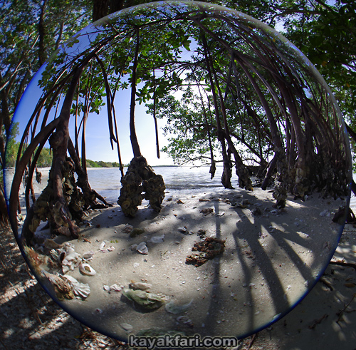 Flex Maslan kayakfari Everglades Art Roots paddling Photography mangroves florida keys bay estuary dreadlocks landscape kayak fisheye