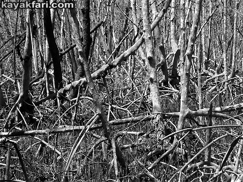 Flex Maslan Kayak Everglades mangrove irma kayakfari dark photography horror tales moon spiders hurricane black white