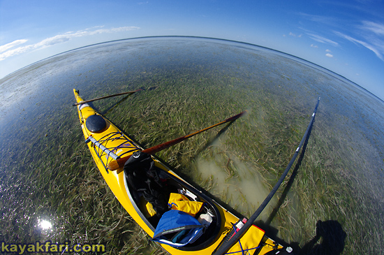 Flex Maslan kayakfari First National Bank Florida Bay kayak Everglades mud flats low tide turtle grass Key